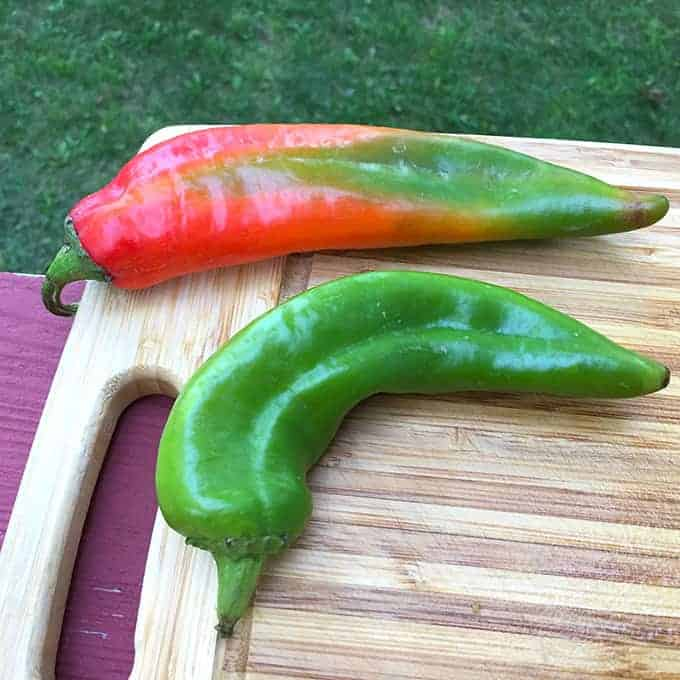 Hatch Chiles come in red or green color. Cooking Chat salsa recipe made with a green chile.