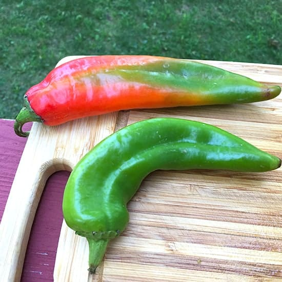 Hatch Chiles come in red and green color. A green chile was used in Cooking Chat's salsa recipe.