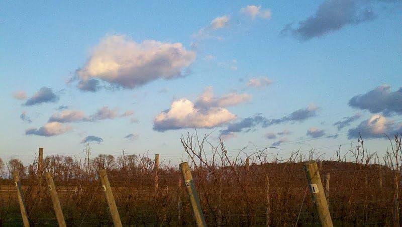 Long Island wine country.