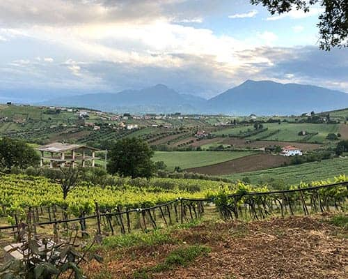 view of vineyards and mountains from Emidio Pepe.