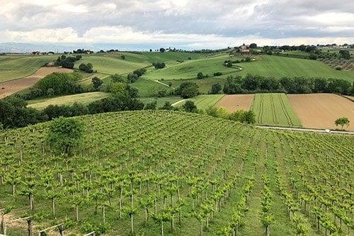 Abruzzo vineyard landscape