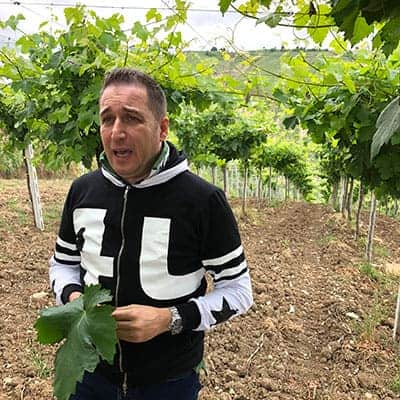 Marchesi vineyard in Abruzzo