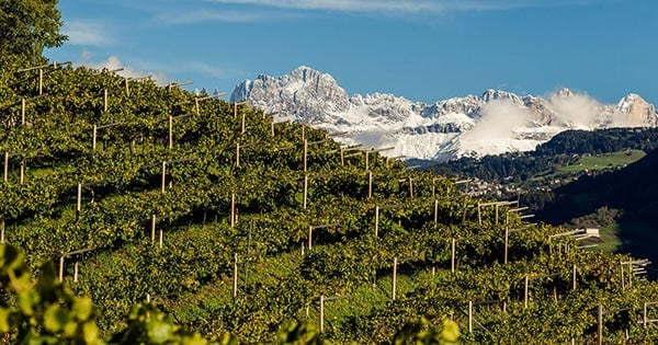 Scene of Alto Adige vineyard with mountains in the background.