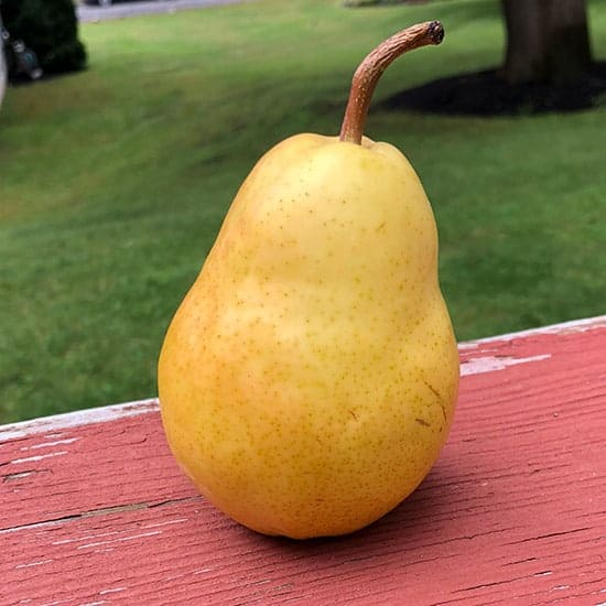 ripe pear on deck railing.