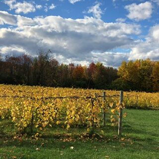 Visiting Shelburne Vineyard and Trying Vermont Wine