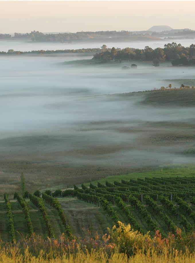 Bodega Cerro Chapeu vineyard, which produces high quality Tannat in Uruguay. #wineries