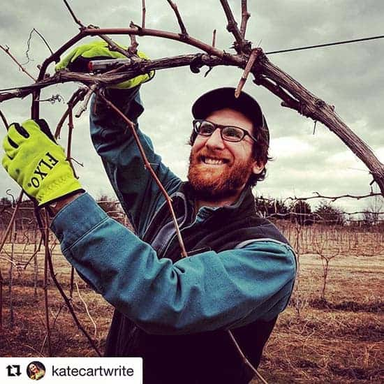 Winemaker Ethan Joseph tending to vines at Shelburne Vineyard.