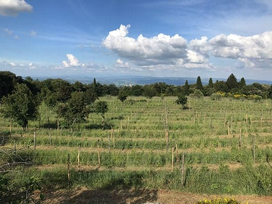View of the vines and hills from Montenidoli winery in Tuscany.