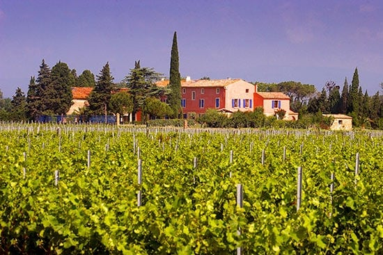 view of Domaine Cigalus vineyard