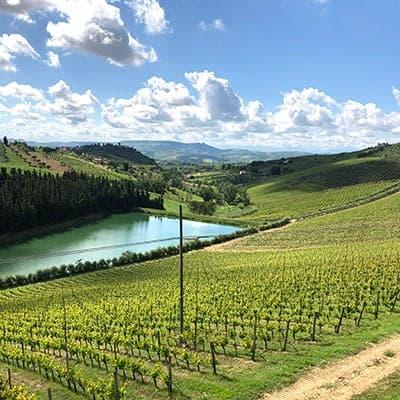 hilly vineyard in Abruzzo