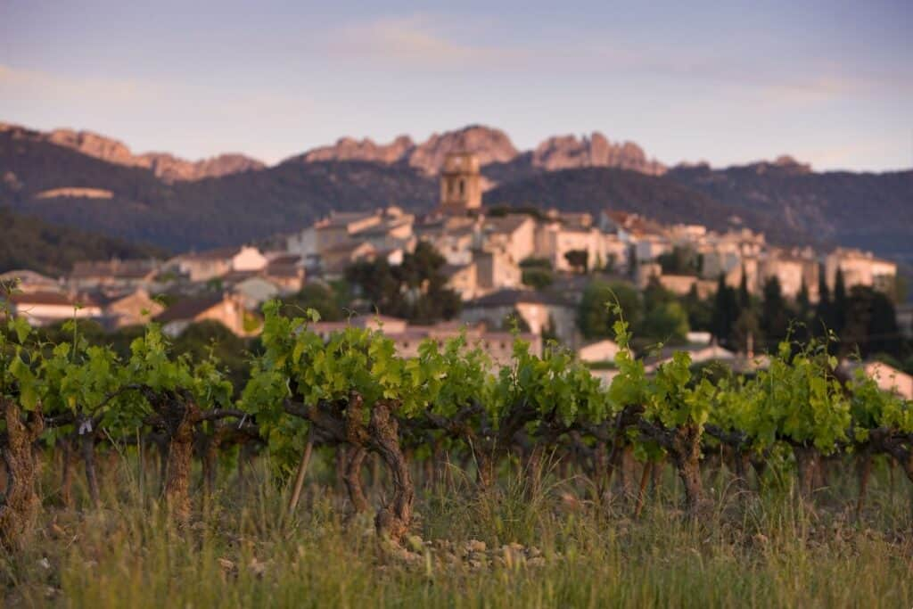view of grape vines in the foreground with a French village in the background.
